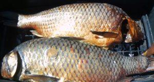 Быстрый Способ Замариновать Рыбу для Горячего Копчения